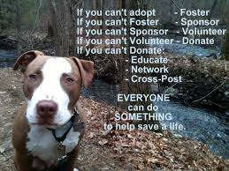 Rescue Dog Quotes Unique Rescued Is My Favorite Breed ASPCA