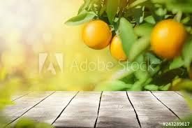 orange fruits tree background stock