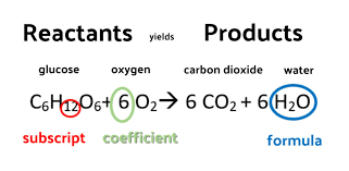 more with flashcards during which carbon dioxide converted into sugar or glucose
