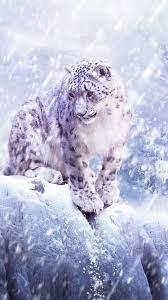 Cover Snow Animals Leopard Iphone Plus ...