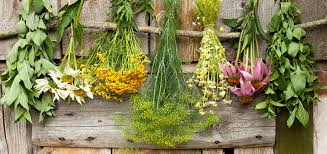 Image result for herbal extracts