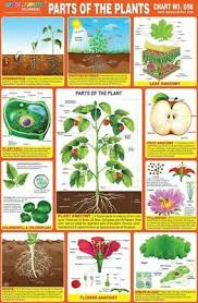 Parts Of The Plants Groth Chart Educational Chart For Kids