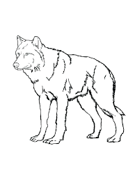 array free printable wolf coloring pages for kids gray wolf coloring page rh velocityaviation co