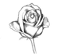 Small Picture Coloring Pages Drawn Rose Easy Roses Pictures Simple Tumblr mosatt