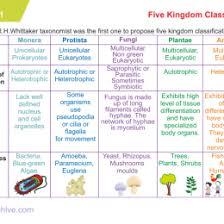 Kingdoms Of Biology Chart Biological Classification Flow Chart Plant Kingdom Cbse