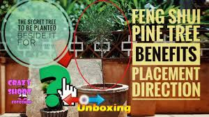 Feng shui home elements plants Positive Energy Pine Tree Feng Shui Plant Unboxing Placement Location Direction Home Garden Longevity Cypress Tree Pine Tree Feng Shui Plant Unboxing Placement Location Direction