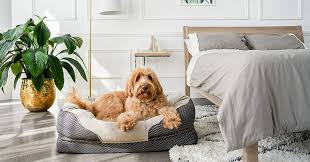 17 Best <b>Dog Beds</b> 2020 | The Strategist | New York Magazine