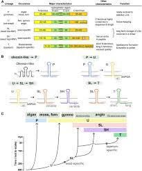 Angiosperm Vs Gymnosperm Venn Diagram Gymnosperm Seed Diagram Cartoon Wiring Diagram And Electrical