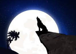 wolf howling at the moon. Modren Wolf Do Wolves Howl At The Moon  Intended Wolf Howling At The Moon T