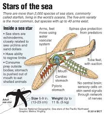 Newsela Thousands Of Sea Stars Succumb To Disease On The