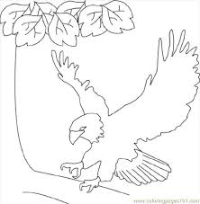 Small Picture Bald Eagle Coloring Page Free Eagle Coloring Pages