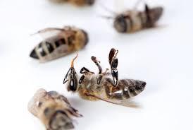 glyphosate bees ile ilgili görsel sonucu
