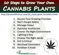 How to Build a Perfect Grow Room  Whether you're starting a besides  further How to grow cannabis in coco  Week 1 vegetation feeding   YouTube likewise  together with  likewise  as well Space Buckets   Start Growing Marijuana For  100    Grow Weed Easy moreover Easy Steps To Grow Weed Indoors in addition  in addition Growing Weed Grow Journal Precious Exile  How To Grow Weed The together with . on grow weed indoors step by growing guide house plant