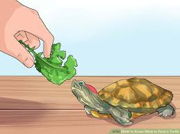 How to Know What to Feed a Turtle: 9 Steps (with Pictures)