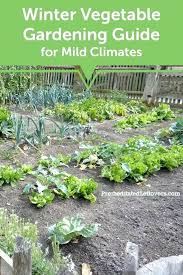 fall garden vegetables. best garden plants for north texas winter vegetable gardening ideas fall in vegetables . a