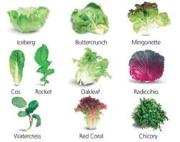 Image Result For Different Types Of Salad Greens Types Of
