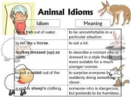 best idioms and more icirc icirc acute icirc sup iuml icirc frac icirc plusmn iuml icirc sup iuml icirc frac icirc iquest icirc macr icirc ordm icirc plusmn icirc sup icirc not icirc icirc icirc plusmn images on animal idioms