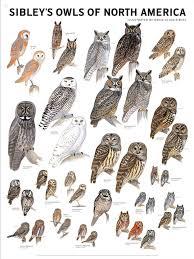 Chart Of Owl Species Birds Birds Animals Elf Owl