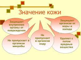 Урок окружающего мира на тему Кожа человека Значение и строение  Назад
