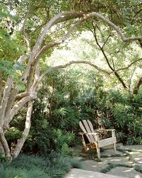 assessing the value of trees and shrubs in your yard