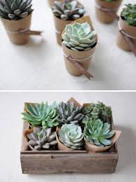 Best 25 Succulent Gifts Ideas On Pinterest  Succulent Party Christmas Gift Plants