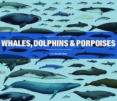 Buy Whales Dolphins And Porpoises A Natural History And