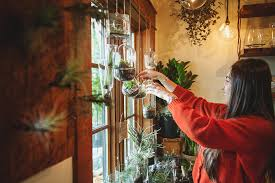 hanging aeriums and terrariums at pistils nursery