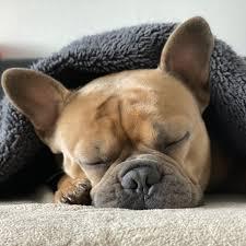 Sleepy Puppy | Facebook
