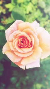Flower Iphone Nature Wallpaper Hd ...