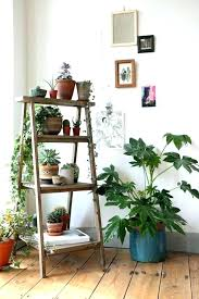 office plant displays. Indoor Plant Displays Ladder Display Shelves Best Ideas On . Office