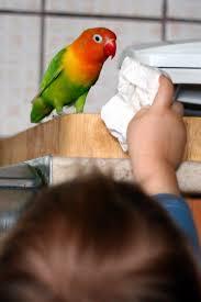 Hasil gambar untuk kids play with lovebird