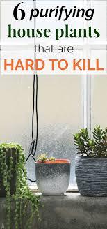 6 Fun U0026 Easy Plants To Grow Indoors   Plant /vegatable Tips   Pinterest    Plants, Indoor And Wellness