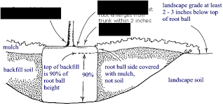 Tree Root Depth Chart Root Ball Depth Roots And Planting Trees Roots