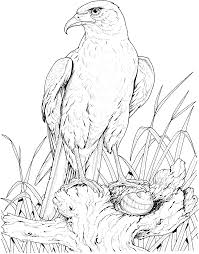Bald Eagle Nest Coloring Page Get Coloring Pages