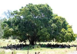Shade Tree Wikipedia