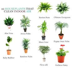 house plants safe for dogs pics of indoor plants pictures of house plants poisonous to dogs house plants
