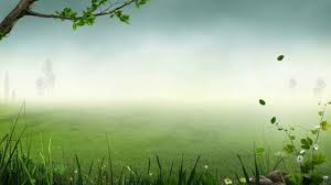 Free download Forest Background Video ...