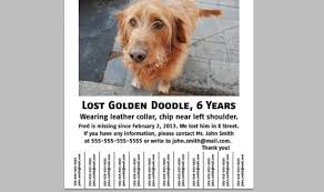 how to make lost dog flyers the dos and donts of making a lost dog flyer dog tips dogs dog