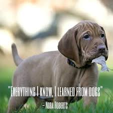 Cute Dog Quotes 32 Awesome Cute Dog Quotes Short Rakeback24me