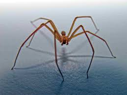 Squashing Urban Legends About The Brown Recluse Spider