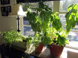Small Picture 25 Awesome Indoor Garden Herb Diy Ideas 9 Herb Garden Ideas Diy