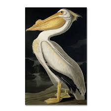 john james audubon x27 american white  on large pelican wall art with shop john james audubon american white pelican canvas art on