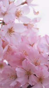 iphone 6 wallpaper pink flower. Contemporary Flower Pink Flower Bunch Macro IPhone 6 Plus Wallpaper With Iphone 6 Wallpaper K