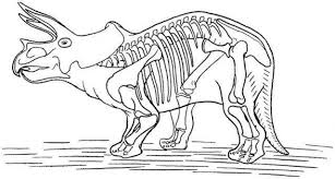 Small Picture Dinosaur Skeleton Pictures