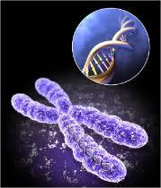 Контрольная работа на тему основы генетики по биологии класса