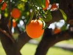 Hitac Trading & Exporting Vegetables & Fruits - شركه هيتاك للتجاره