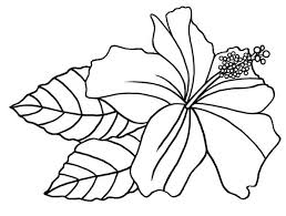Small Picture Free Printable Hibiscus Coloring Pages For Kids Coloring