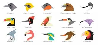 Bird Beak Chart How Are The Beaks And Claws Of Birds Helpful To Them Quora
