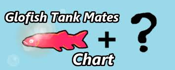 Tiger Barb Compatibility Chart A Guide Chart To Choosing Glofish Tank Mates Aquanswers