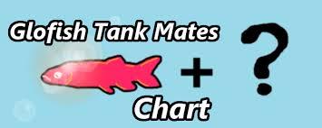 A Guide Chart To Choosing Glofish Tank Mates Aquanswers